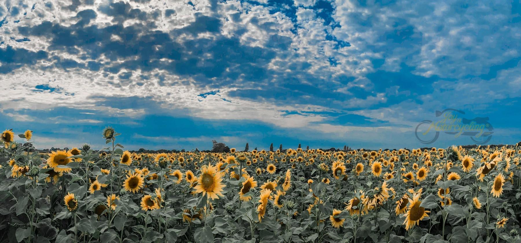 USA - Photo by Tamara Gore via Unsplash